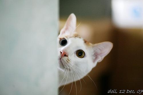 躲猫猫  看到可爱的猫猫总想捏几下 这 是否强迫症啊     &nbsp
